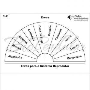Ervas - Sistema Reprodutor